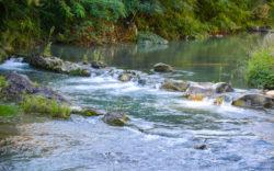particolare_del_fiume